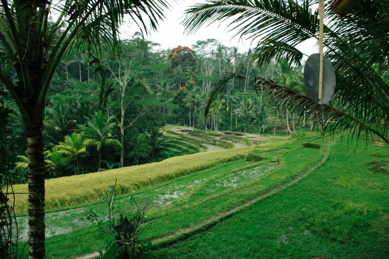 Bali-241