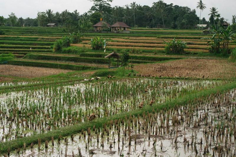 Bali-289