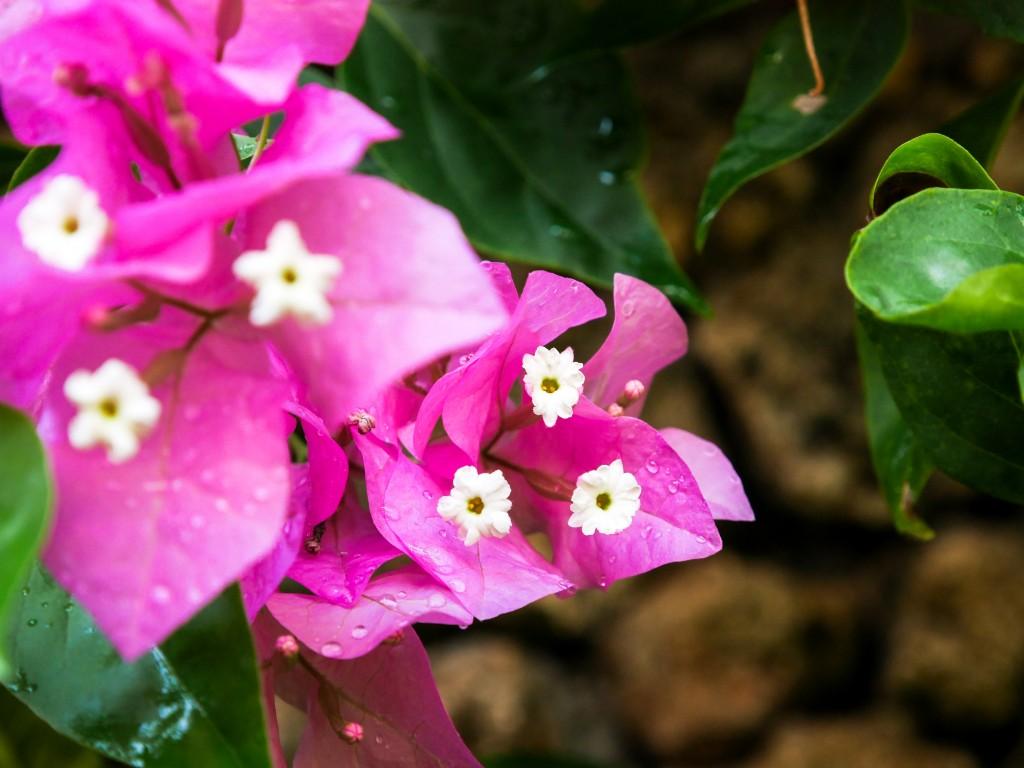 carnet voyage bali blog lili in wonderland