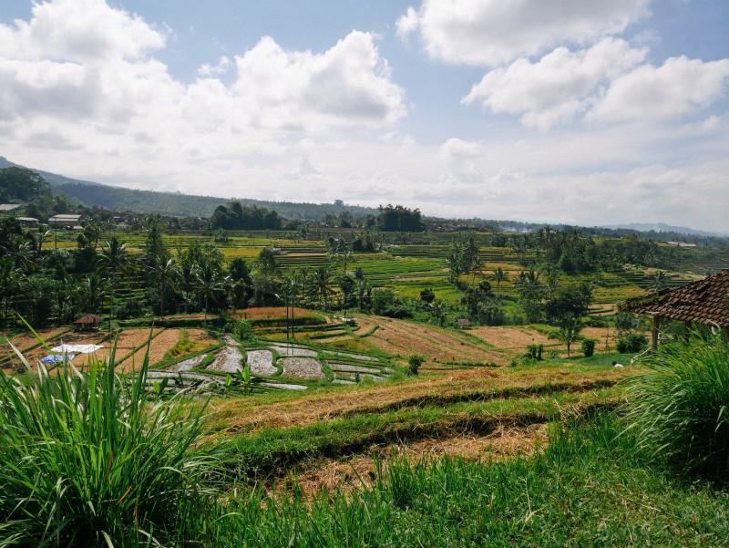 Bali-528