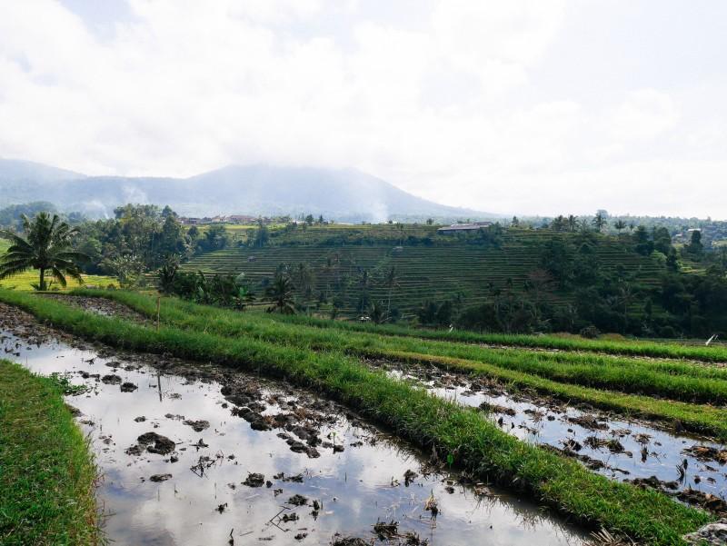 Bali-535