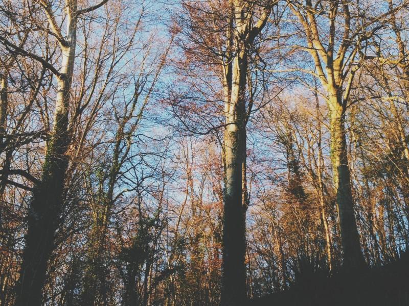 bois normandie