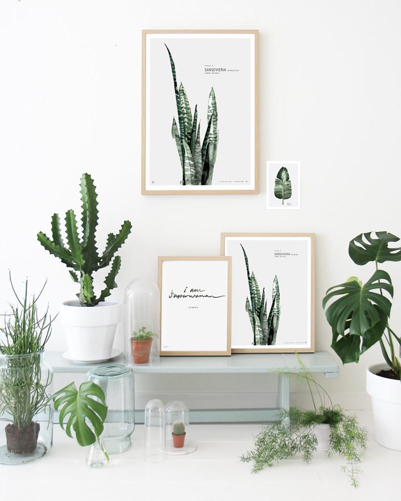 botanic urban