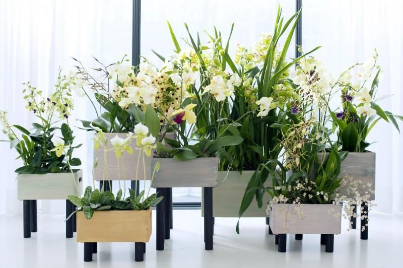orchidées 4