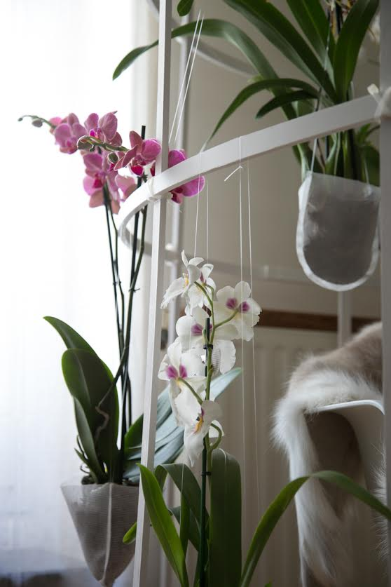 orchidées-stylisme