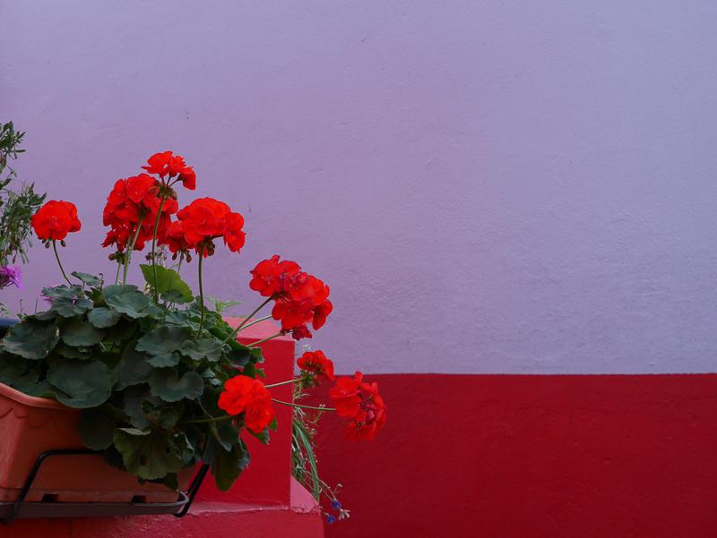 lili inwonderland-7