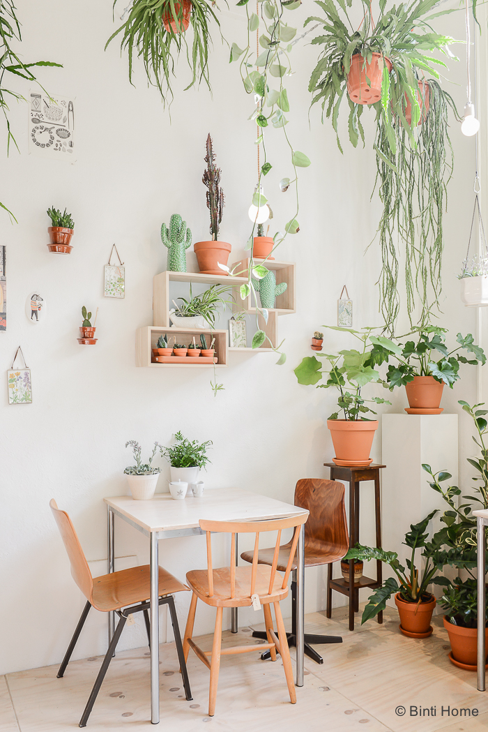 Wildernis Boutique De Plantes Urbaines Lili In Wonderland