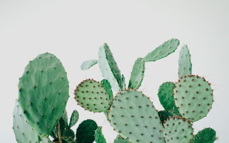 kaktus-lili-in-wonderland-2