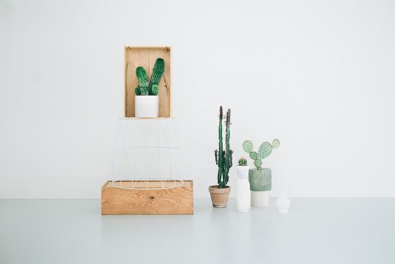 kaktus-lili-in-wonderland-3