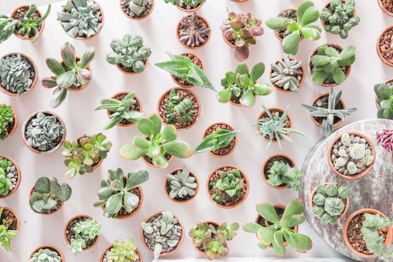 kaktus-lili-in-wonderland-4