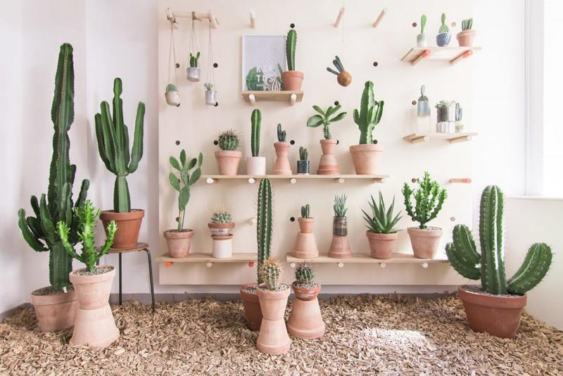 kaktus-lili-in-wonderland-5