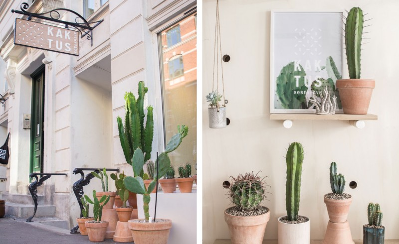 kaktus-lili-in-wonderland-7