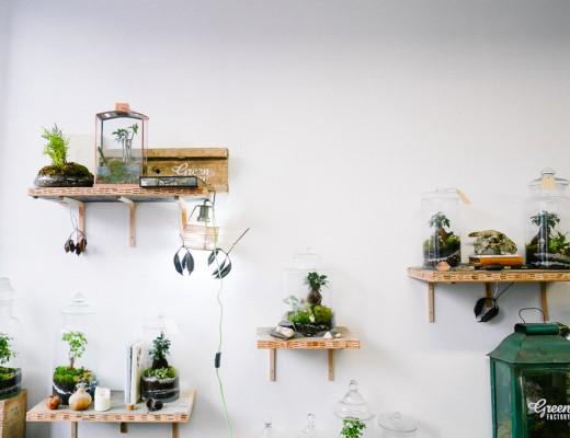 green-factory-lili-in-wonderland