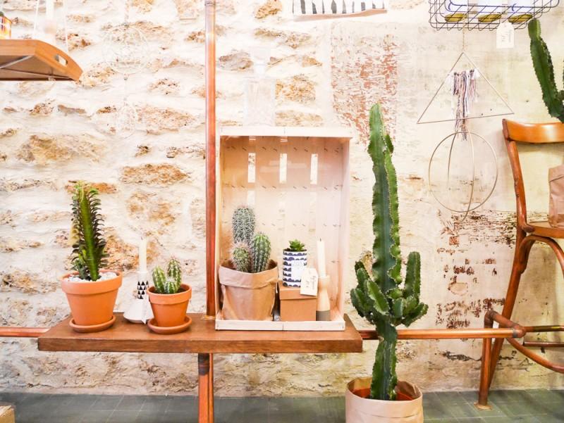 ay-cactus-lili-in-wonderland-12