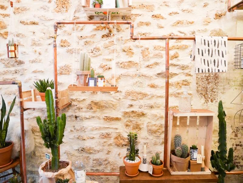 ay-cactus-lili-in-wonderland-15