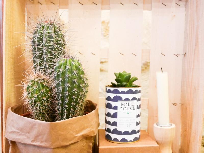 ay-cactus-lili-in-wonderland-16