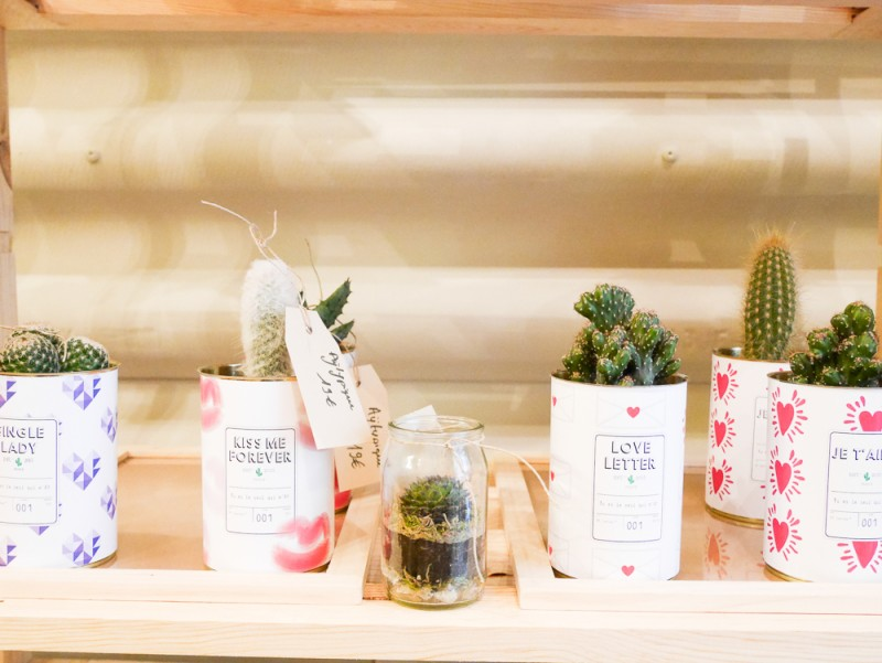 ay-cactus-lili-in-wonderland-18