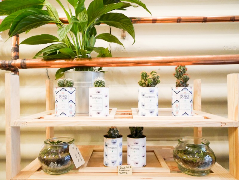 ay-cactus-lili-in-wonderland-20