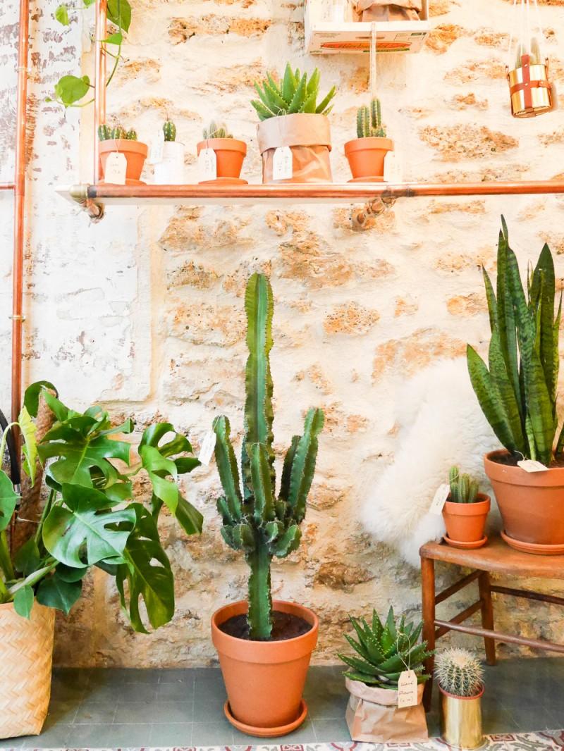 ay-cactus-lili-in-wonderland-3