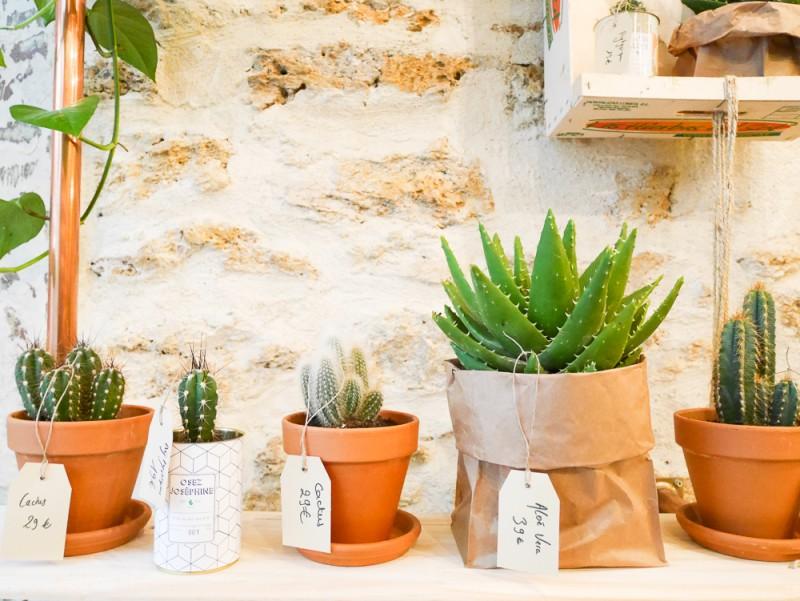 ay-cactus-lili-in-wonderland-4
