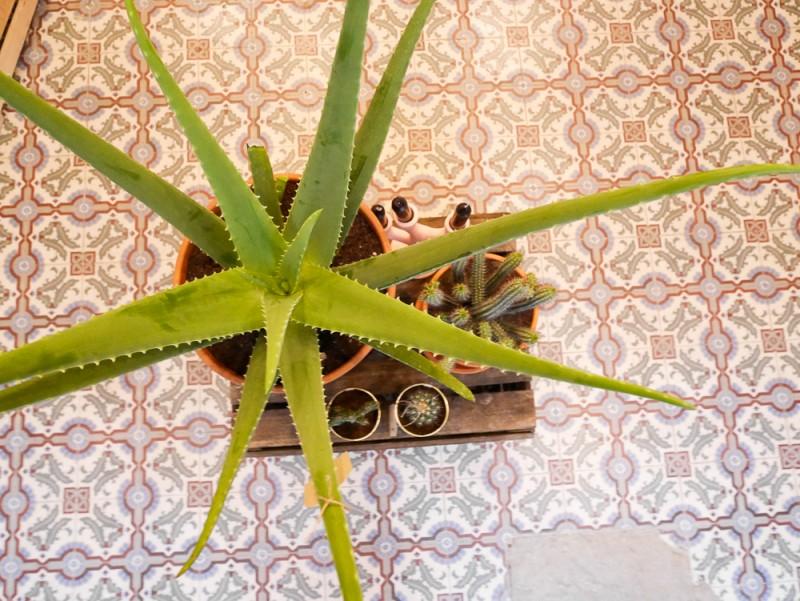 ay-cactus-lili-in-wonderland-5