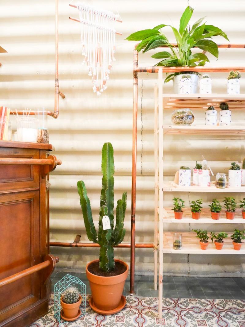 ay-cactus-lili-in-wonderland