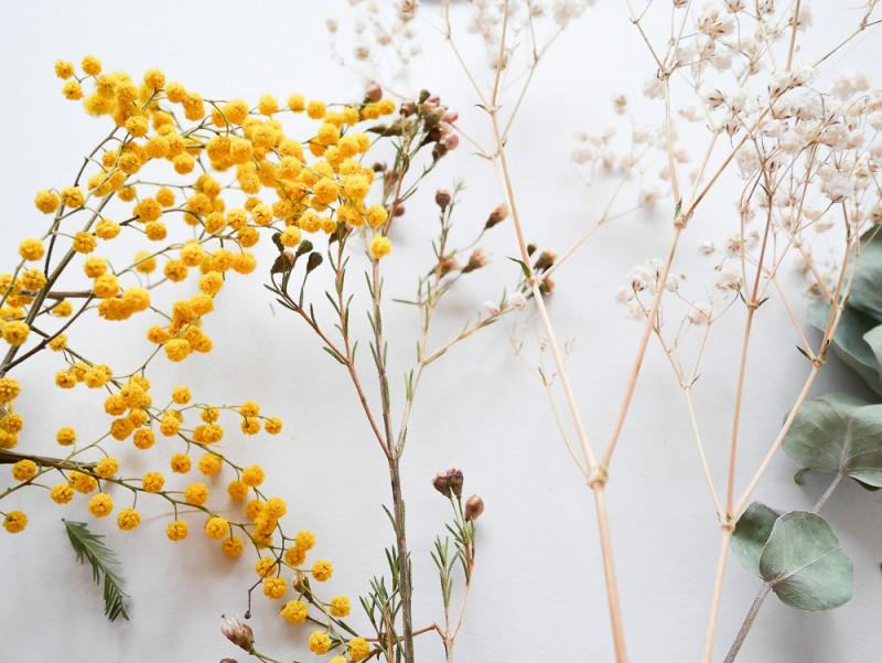 diy-herbier-lili-in-wonderland-3