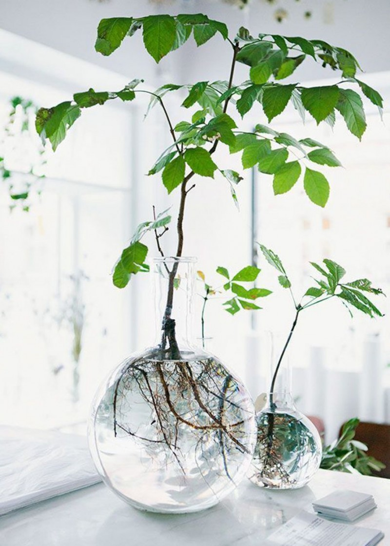 plantes-decorer-interieur