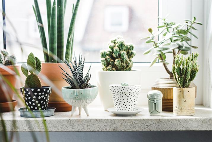 plantes-decorer-interieur-lili-in-wonderland-14