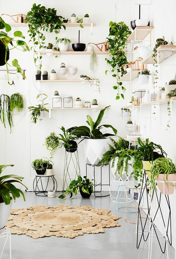 Plantes decorer interieur lili in wonderland 6