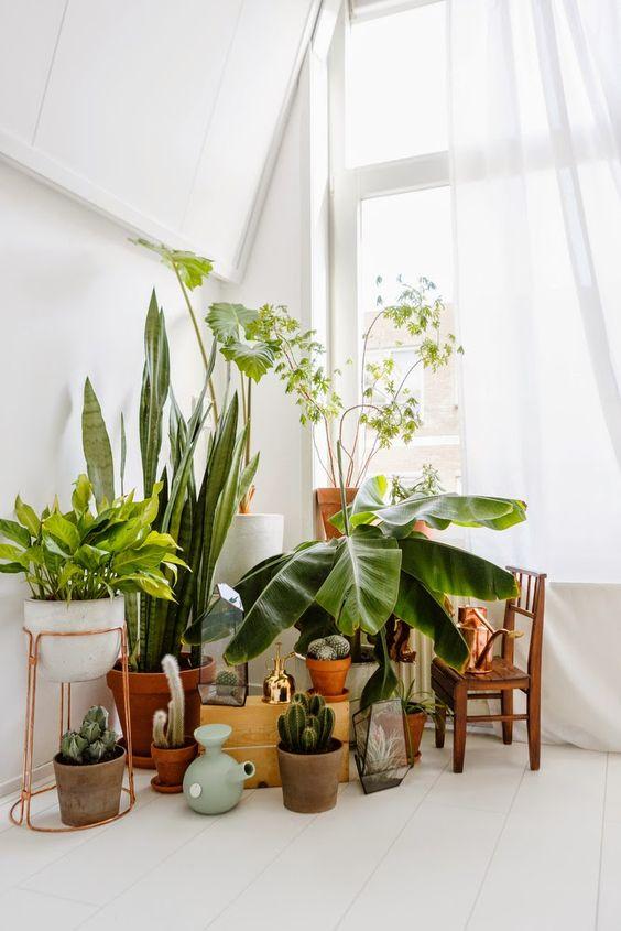 D corer avec les plantes des id es pour son int rieur for Plantes interieur tombantes