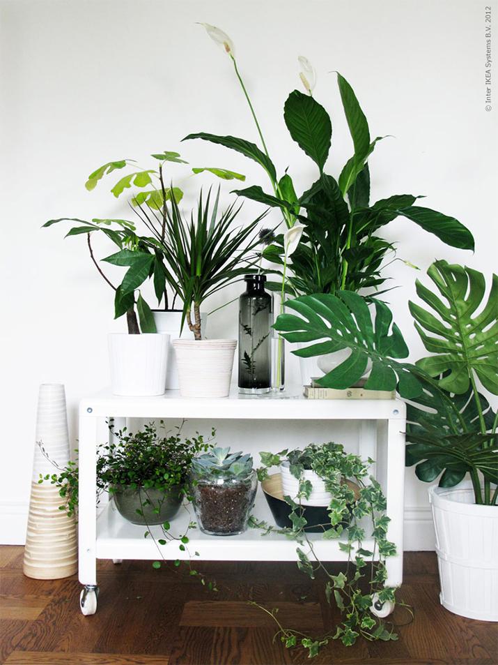 d corer avec les plantes des id es pour son int rieur. Black Bedroom Furniture Sets. Home Design Ideas