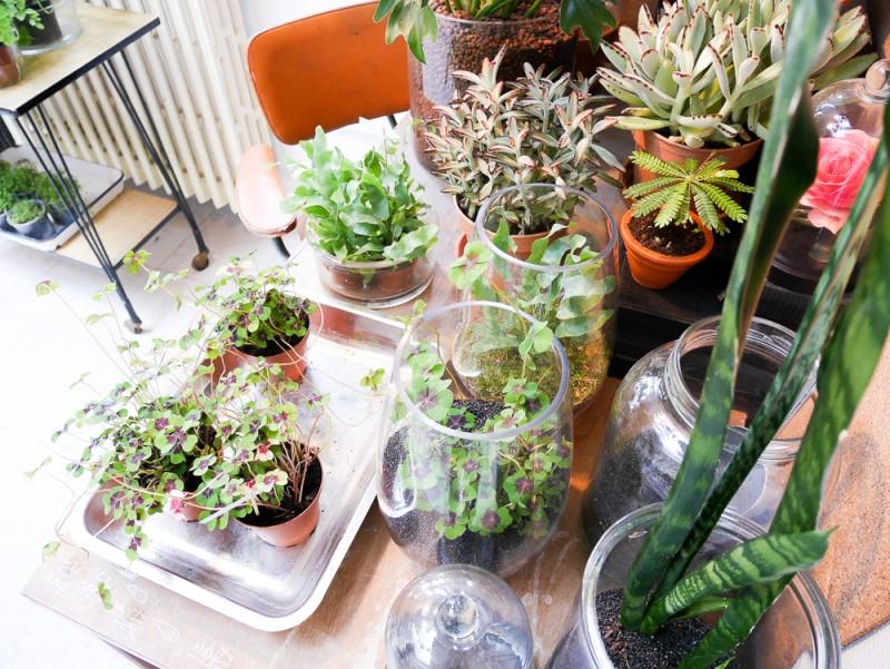 mama petula concept store décoration végétale green plantes lili in wonderland