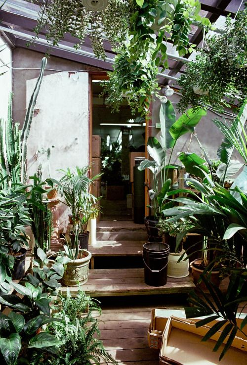 oasis-jardin-de-reve-liliinwonderland-7