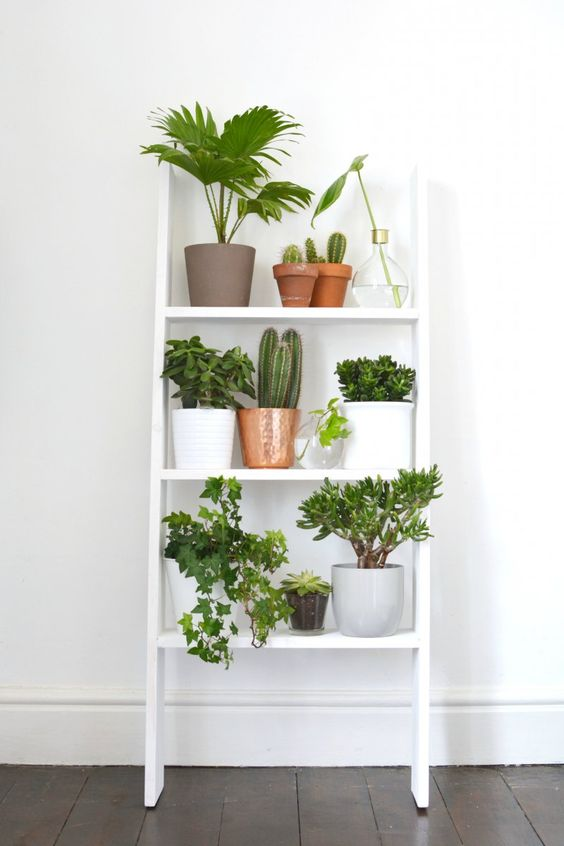 etagere_echelle_plantes_6