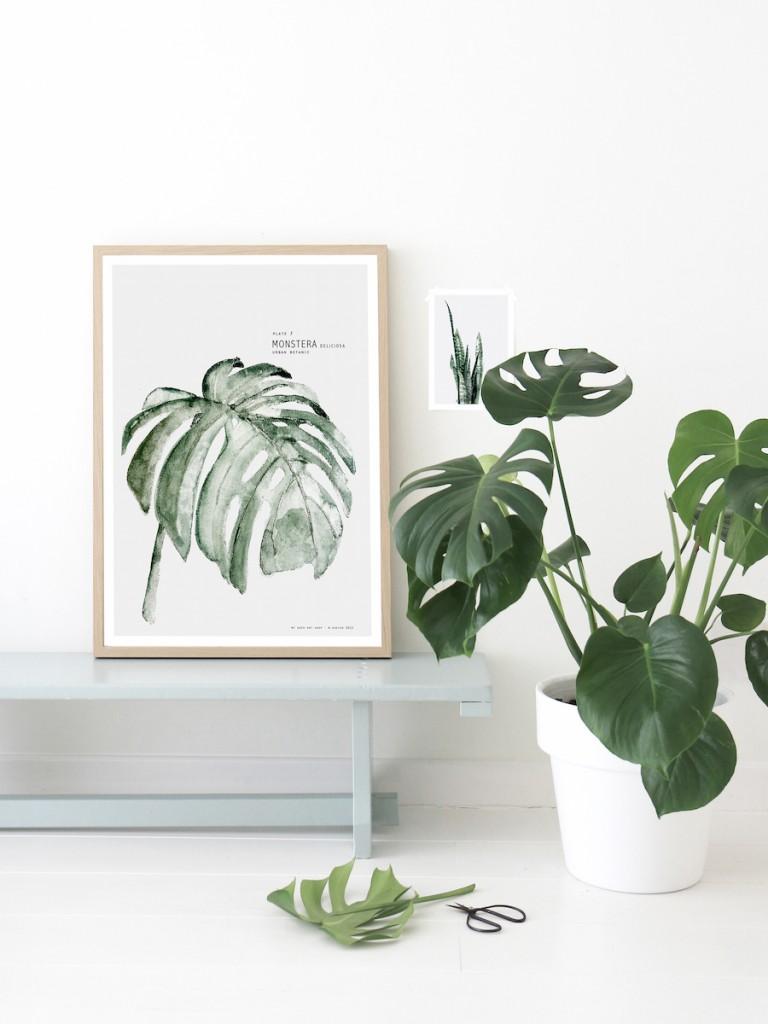 monstera-plantes-interieur-facile-entretien-liliinwonderland
