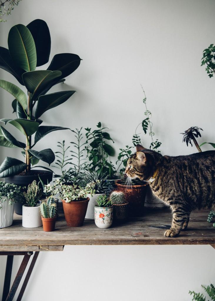 plante-interieur-facile-entretien-lilinwonderland