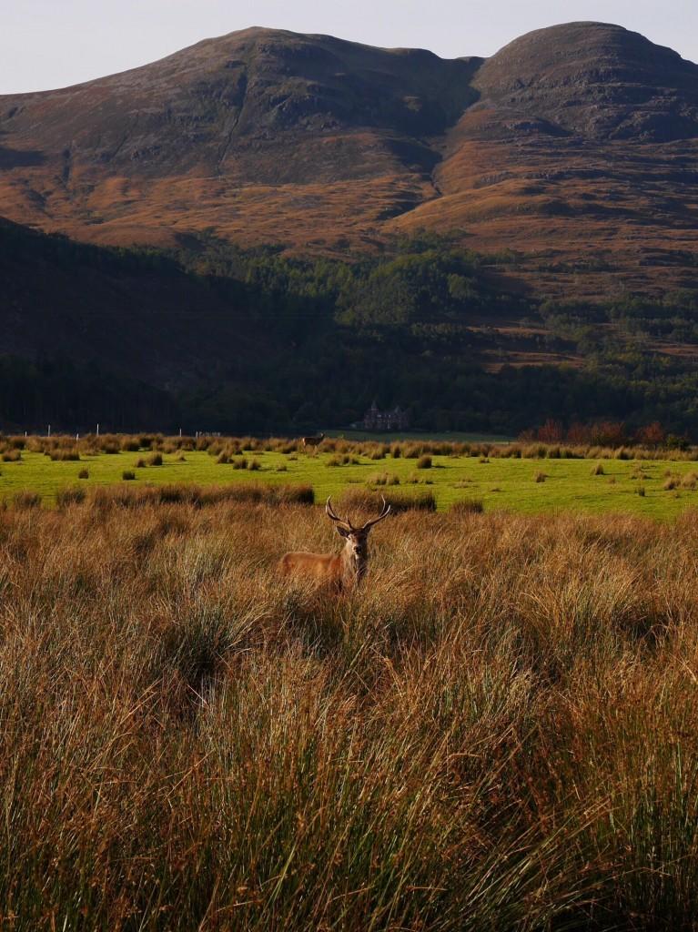 road-trip-ecosse-scotland-liliinwonderland-22