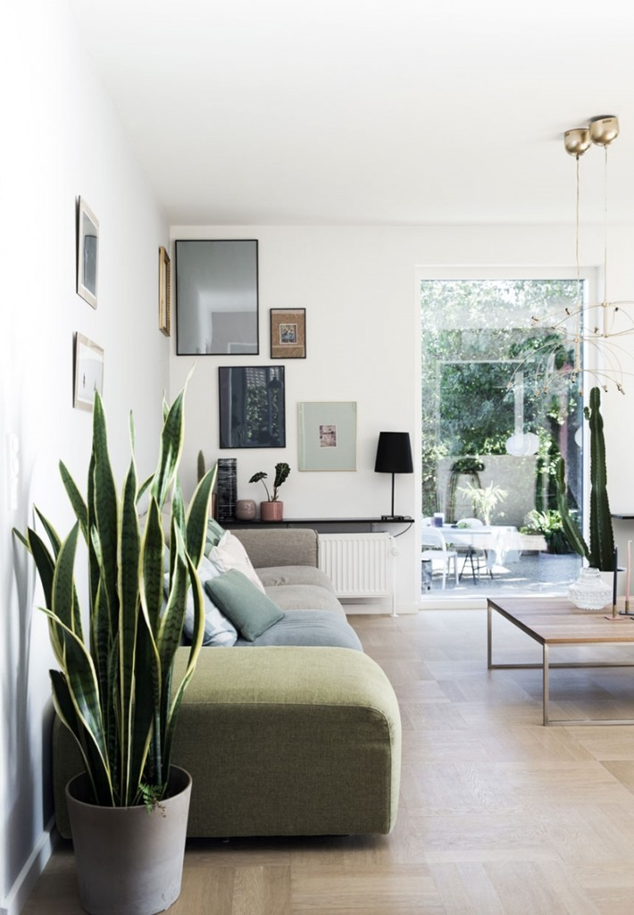 sansevieria-plante-interieur-facile-entretien-lilinwonderland