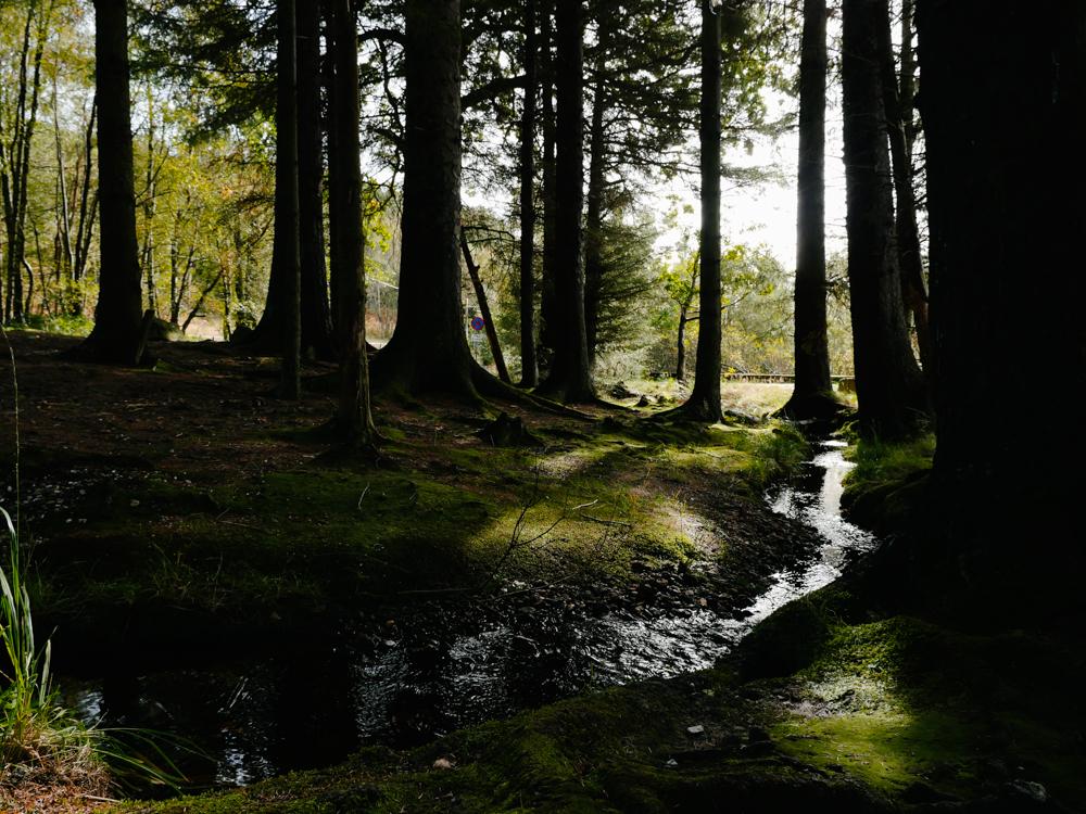 road-tri-ecosse-edimbourg-loch-lomond-lili-in-wonderland-66