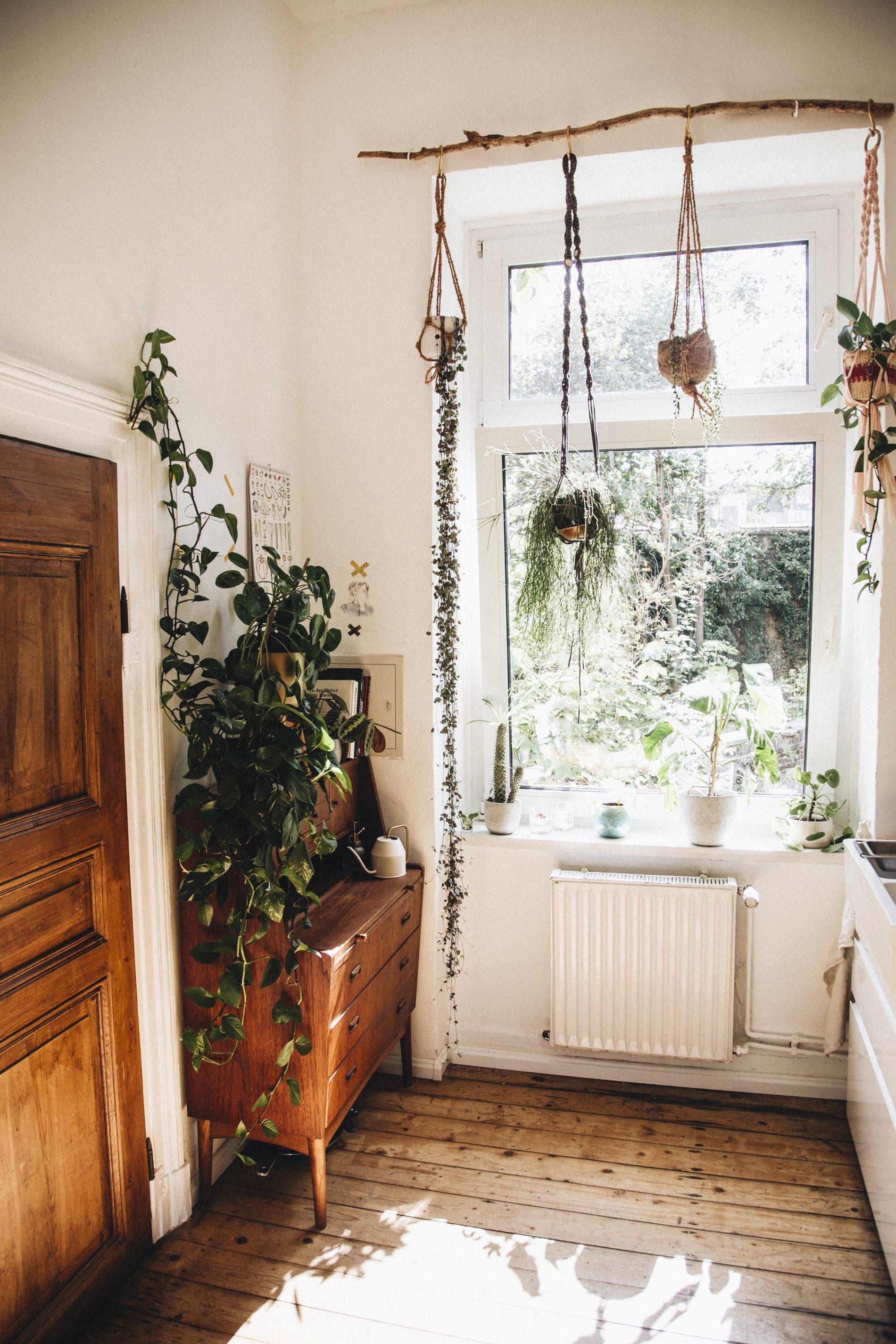 intérieur bohème plein de plantes déco