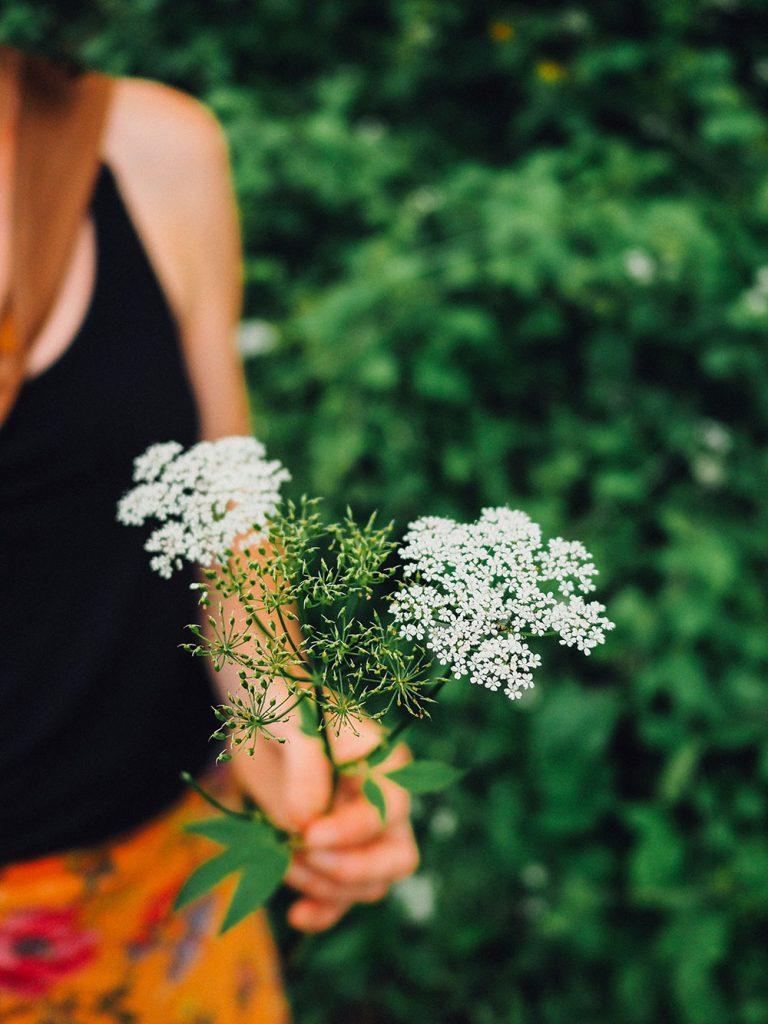 week-end Guebwiller nature cueillir fleurs sauvages