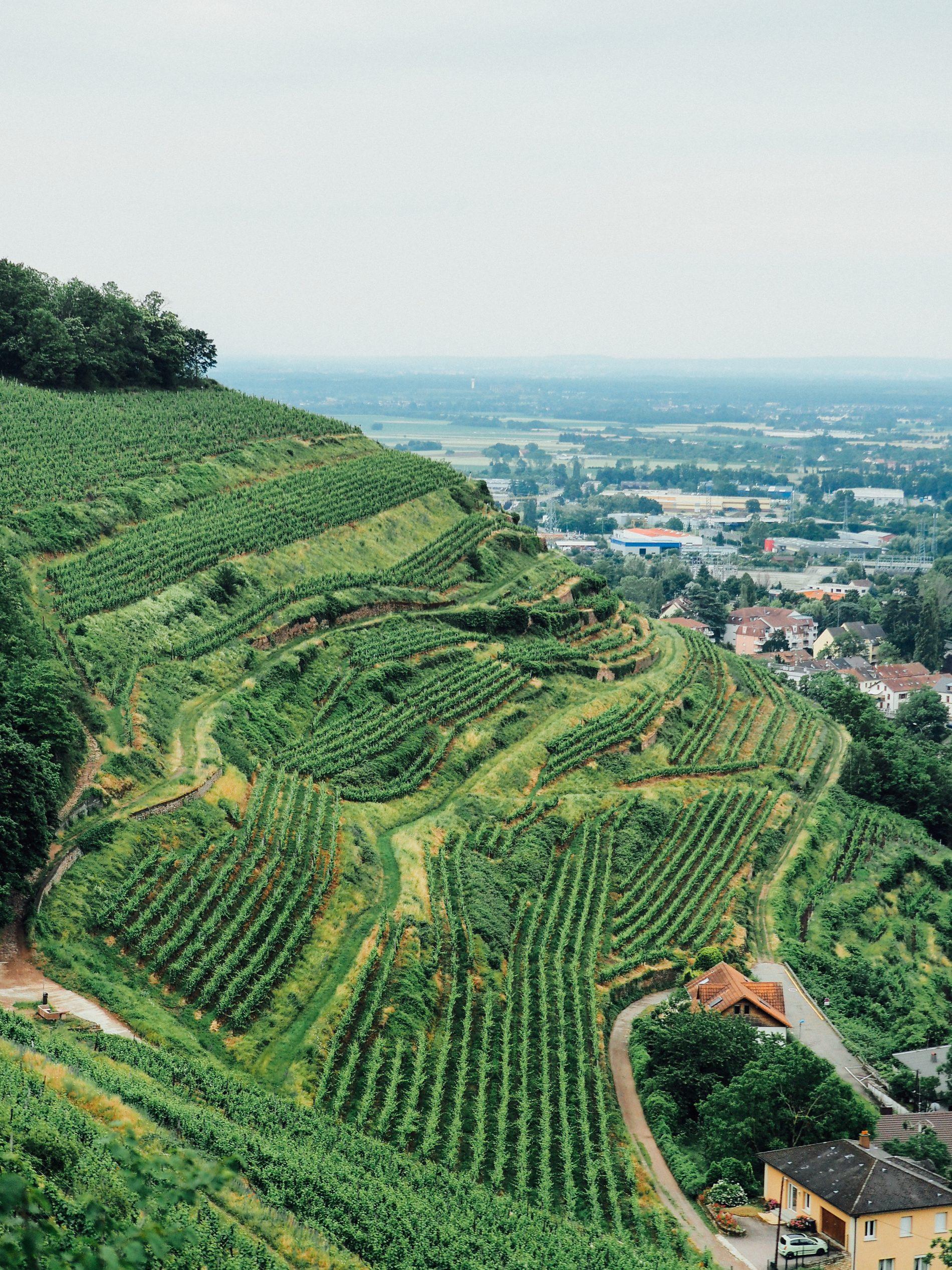 week-end nature Guebwiller vins d'Alsace domaine Schlumberger