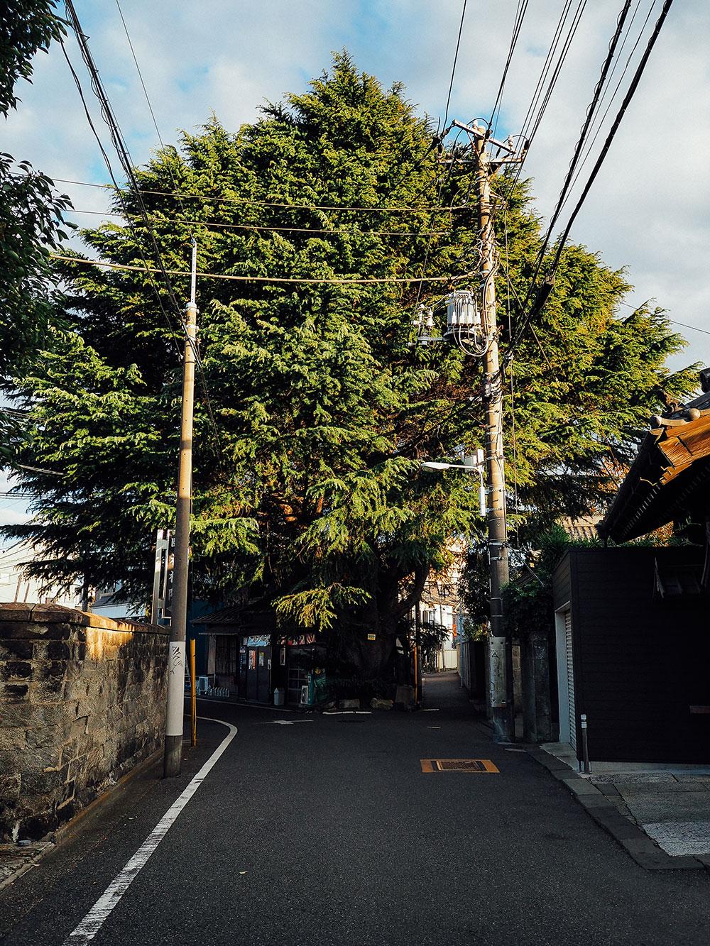 cedre rue yanaka nezu Tokyo traditionnel