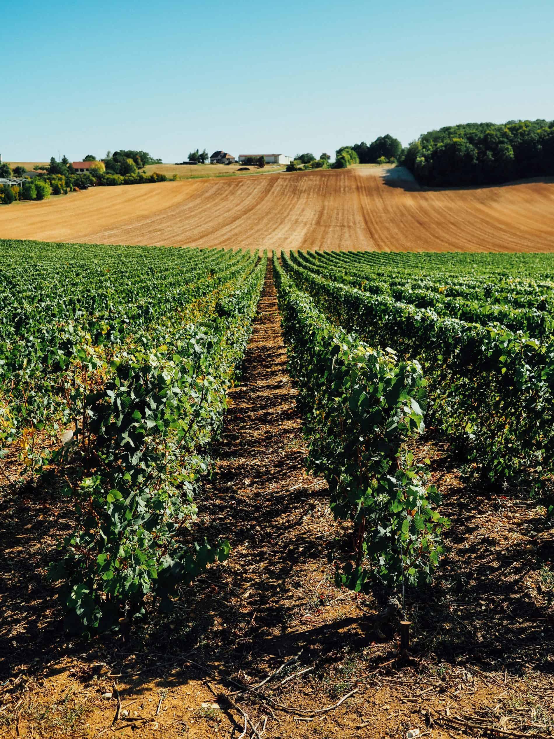vignes week-end Troyes blog lili in wonderland