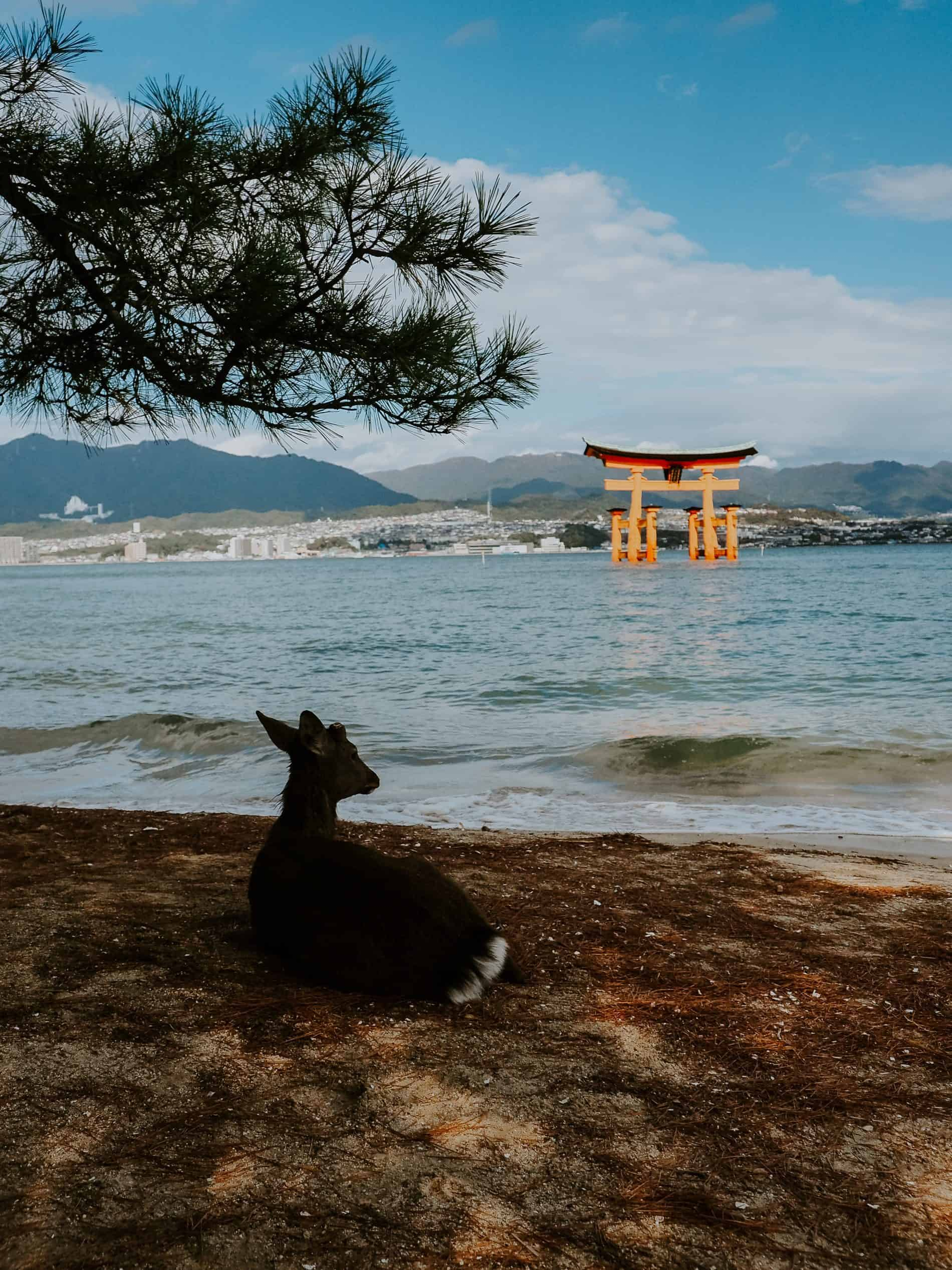 visiter miyajima torii biche ile Hiroshima voyage japon blog lili in Wonderland